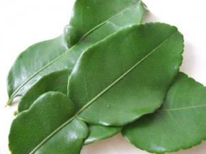 タイ料理の材料 こぶみかんの葉