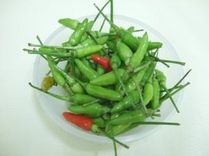 タイの料理の材料 唐辛子