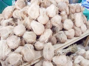 タイのココナッツ