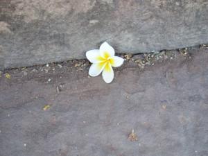 タイで見つけた一輪の花